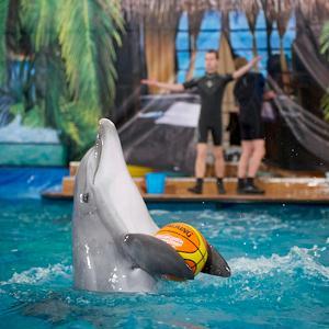 Дельфинарии, океанариумы Красногорска