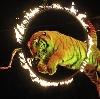 Цирки в Красногорске