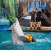 Дельфинарии, океанариумы в Красногорске