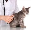 Ветеринарные клиники в Красногорске